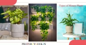 Top 9 Types of Money Plants to Keep in Homes